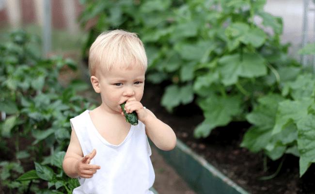 תינוק טבעוני, בריאות